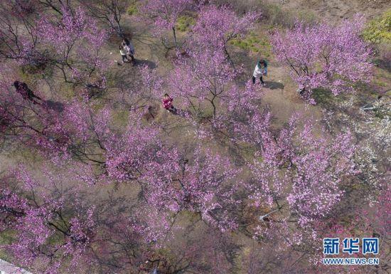 #(社会)(4)春暖花开迎客来