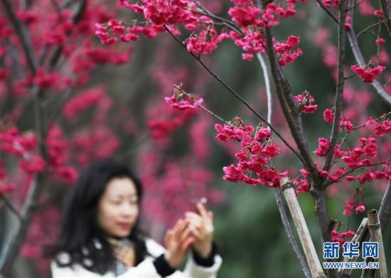 #(社会)(1)春暖花开迎客来