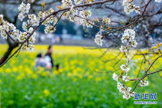 #(社会)(8)春暖花开迎客来
