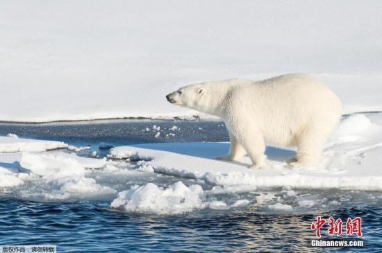 海水变暖致全球渔获80年来减少35%