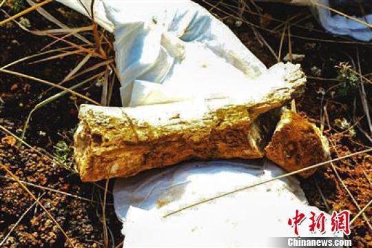 青海评价出世界级地质遗迹专家称或将发现更多动物化石