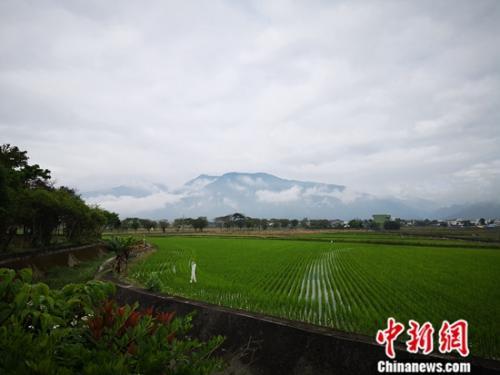 """台湾写真:台东池上""""稻田里来了艺术家"""""""