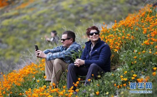 (国际)(2)春到加州 山花盛放