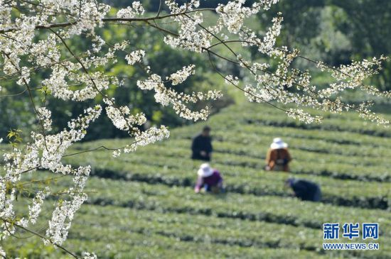 #(社会)(1)春暖劳作花相伴