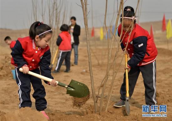 (社会)(2)我与小树共成长