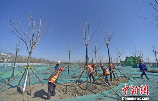 """天津港保税区""""城市绿廊""""施工过半今年有色可观"""