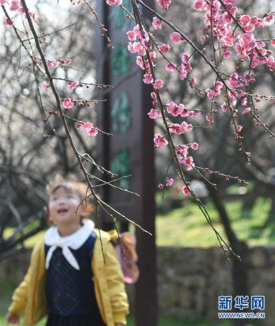 (社会)(2)江苏苏州:香雪海里赏花寻春