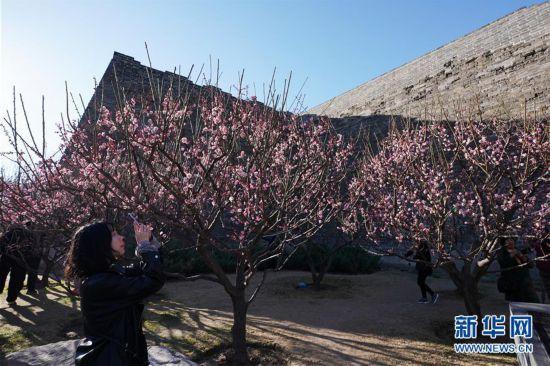 (情况)(2)春暖花渐开