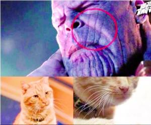 漫威电影《惊奇队长》领跑票房有一种猫站稳银幕C位