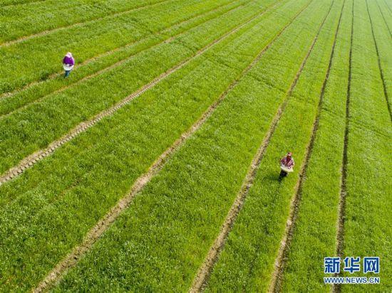 #(经济)(1)正是春暖农忙时