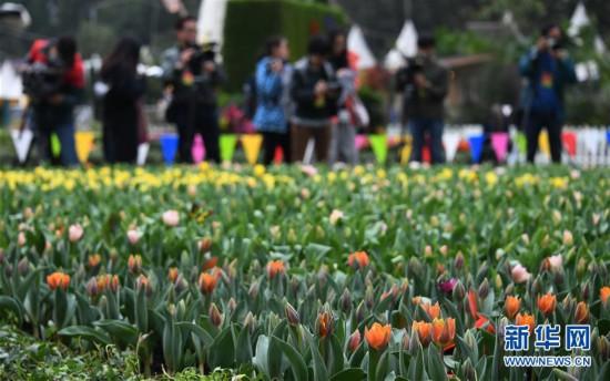 (社会)(2)2019年香港花卉展览即将揭幕