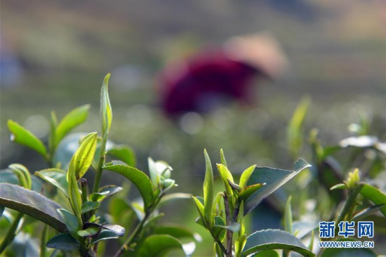 #(经济)(4)正是春暖农忙时