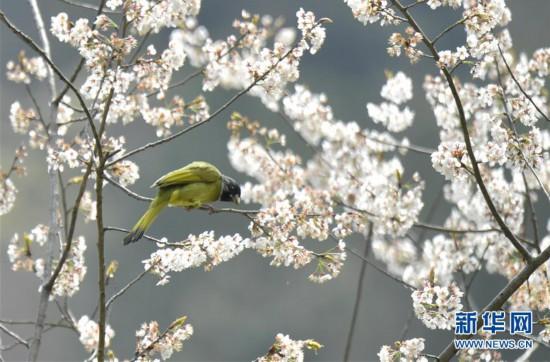 #(环境)(1)鸟儿戏春
