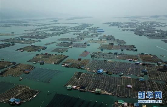 福建霞浦:小海参 大产业
