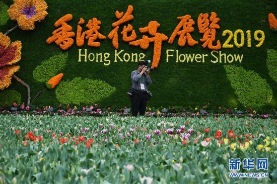 (社会)(1)2019年香港花卉展览即将揭幕