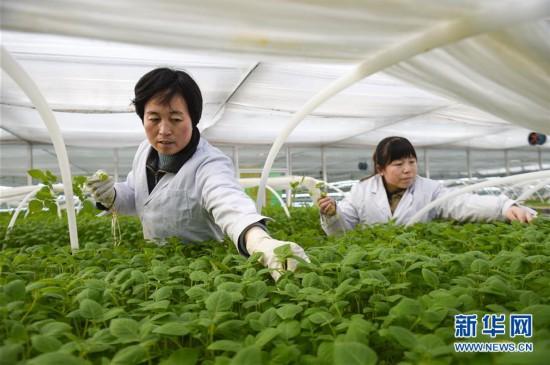 (经济)(1)宁夏西吉:春日育苗忙