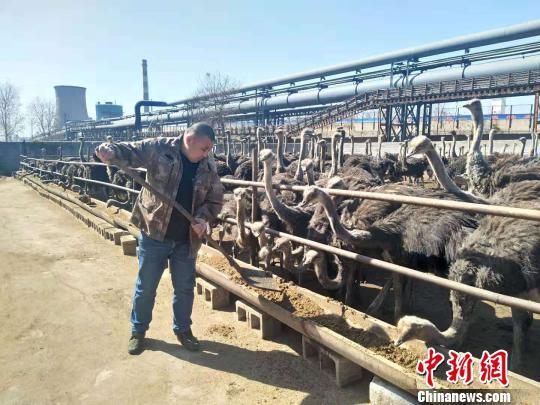 """农大博士开发""""鸵鸟经济""""远销欧美日韩农户年均增收9万元"""