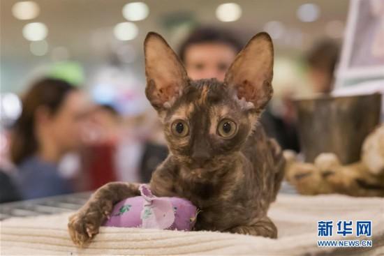 匈牙利举办宠物猫展