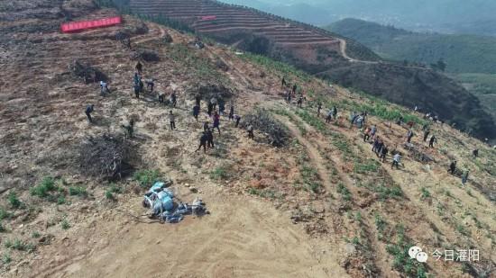 """灌阳县开展""""兴水利、种好仿真棕榈树树、助脱贫、惠民生""""主题活动"""