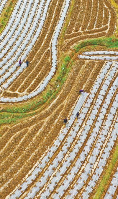 大地回暖农事早一犁新雨润春耕