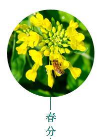 春分广州:感受静谧而美好的春日时光