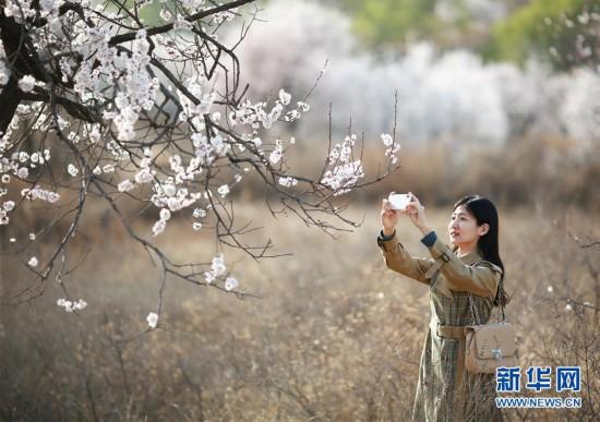 (社会)(1)河北内丘:春分时节享春光