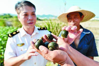 农业发展|外来有害生物入侵农林,咋防范