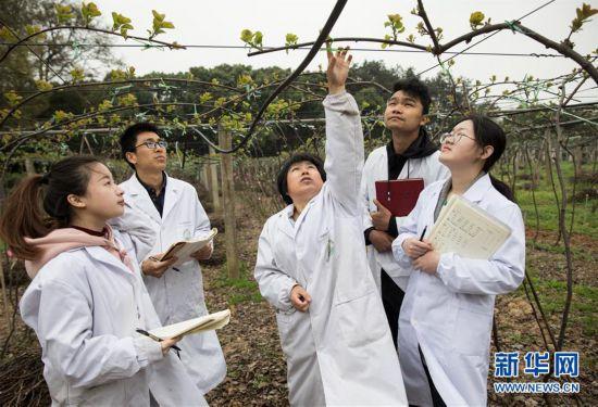(科技)(1)探访国家猕猴桃种质资源圃