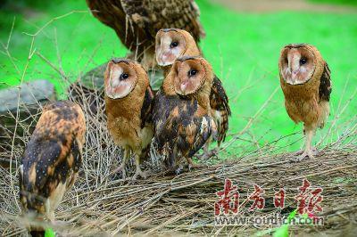 """其中,3月20日为""""鸟节"""")在长隆野生动物世界启动,有一群""""怪鸟""""格外引人"""