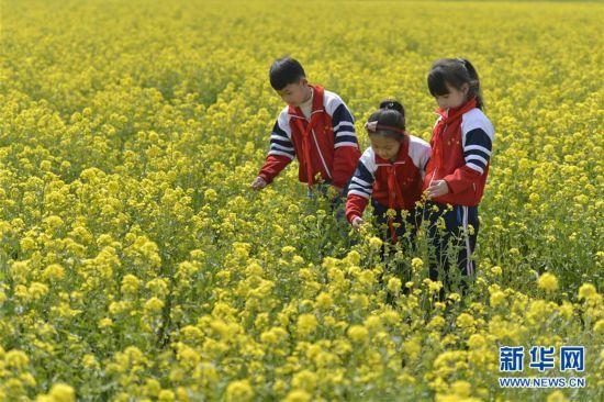 (春季美丽生态)(2)河北沙河:油菜花开 乐享春光