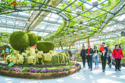 北京农业嘉年华辟8000车位迎客流高峰