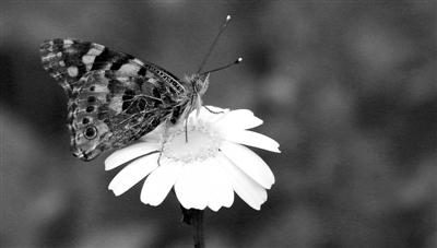 约十亿只蝴蝶经以色列向欧洲迁徙