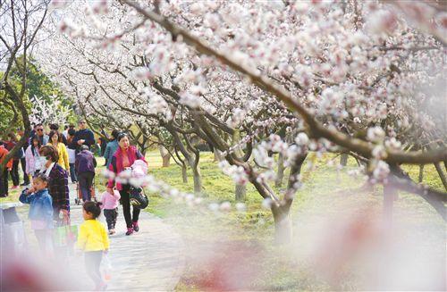 徐州街头百花竞艳 吸引游客和市民探春赏花