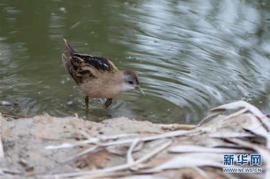 (国际)(7)以色列埃拉特国际观鸟节