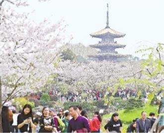 武汉首条定制公交樱花专线来了 可扫码订座位