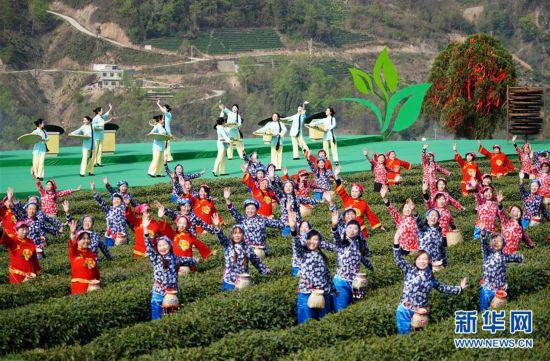 (社会)(1)陕西紫阳:春日茶山迎客来