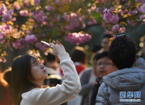 (春季美丽生态)(4)樱花烂漫 游人如织