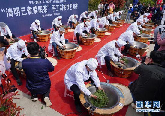 (社会)(7)陕西紫阳:春日茶山迎客来