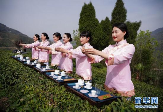 (社会)(2)陕西紫阳:春日茶山迎客来