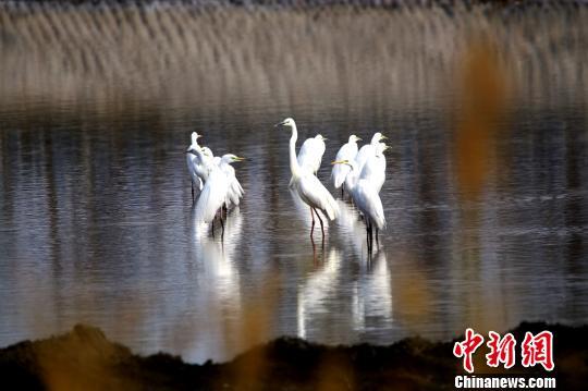 彩票投注站需要走后门,新疆托克逊县白杨河成候鸟天堂