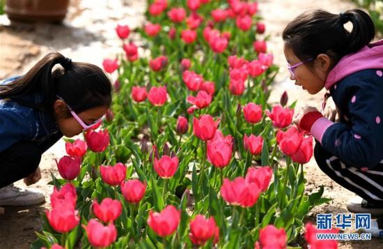 #(社会)(8)人在花中游