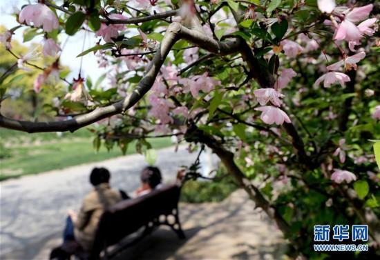 (环境)(1)上海:春光明媚 海棠花开