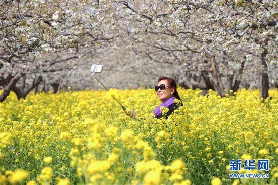 #(社会)(5)人在花中游