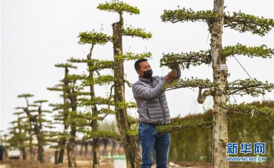 (环境)(2)河北霸州打造环雄安绿色生态屏障