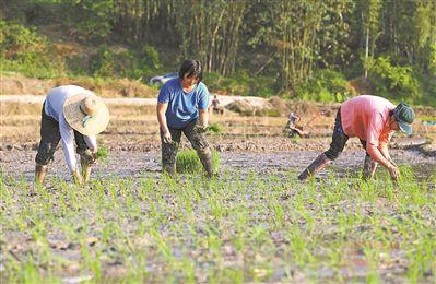 广州从化:春色阡陌绿水人家