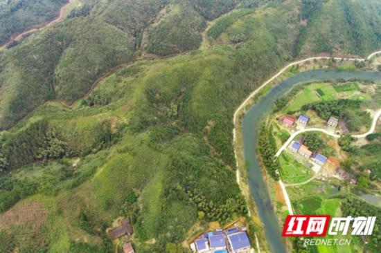 平江县石洞村脱贫新貌:油茶成林,茶园添新绿