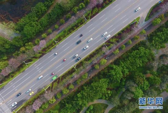 广西柳州:繁花绿叶春正浓
