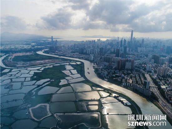 航拍深圳河 水质达30年来最佳