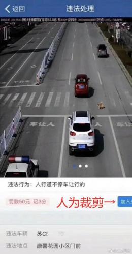 斑马线不停车让狗被罚款扣分?徐州交警辟谣