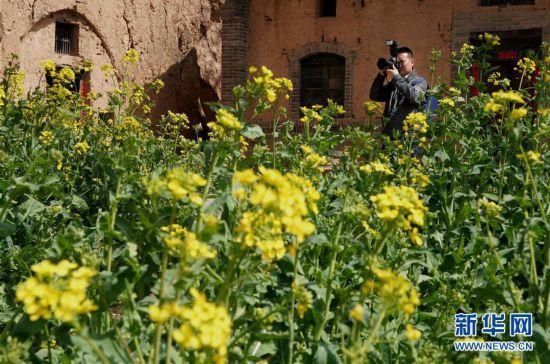 """(来自一线的调查报告·图文互动)(5)大山里的""""爱和小镇"""":当乡村遇上艺术"""